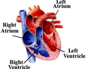 Manfaat dan Khasiat Puasa Untuk Menjaga Kesehatan Jantung Anda
