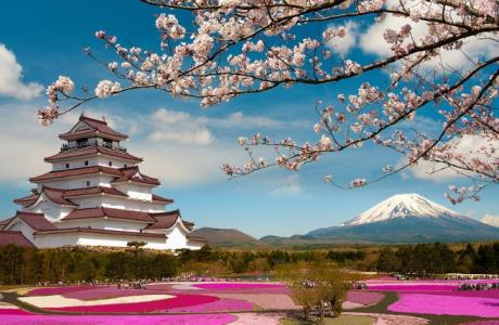 5 Fakta Unik Bunga Sakura Jepang yang Wajib Anda Ketahui