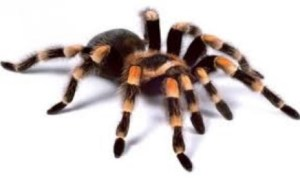 Fakta Unik dan Menarik Seputar Laba-laba yang Perlu Anda Ketahui