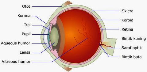 Mata Sebagai Alat Indra Manusia, Pembahasan Fungsi dan Bagian-Bagiannya