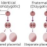 Perbedaan Antara Kembar Monozigot (Identik) dengan Kembar Dizigot (Fraternal)