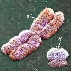 Gen dan Kromosom Sebagai Pengendali Pewarisan Sifat Makhluk Hidup