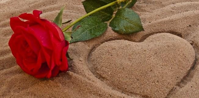 Fakta Unik dan Menarik Bunga Mawar Sebagai Simbol Kebahagiaan dan Cinta
