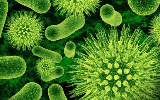 Fakta Unik dan Menarik Seputar Bakteri Untuk Anda Ketahui