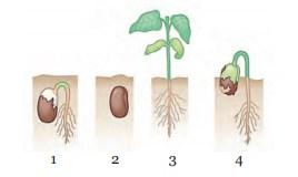 Latihan Soal Sistem Reproduksi Tumbuhan Dan Kunci Jawabannya