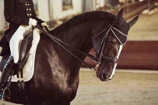 Il cavallo da dressage: le razze e le qualità che deve avere