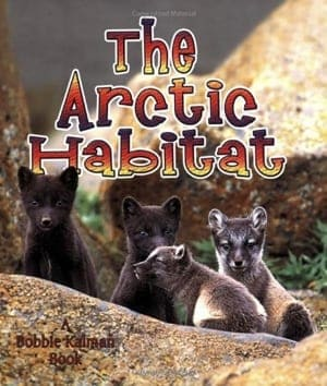 arctic animal book- arts and crafts activities - winter animal kid craft- amorecraftylife.com #kidscraft #craftsforkids #preschool