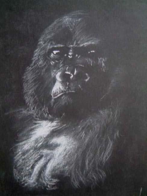 Gorilla - Chalk
