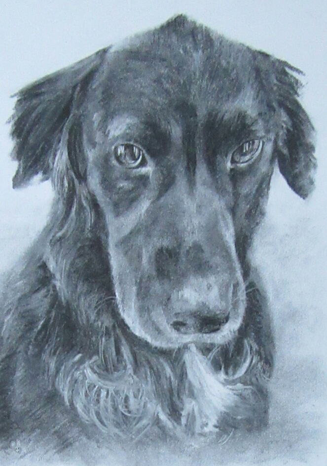 Pet portrait in charcoal by Amosartworks