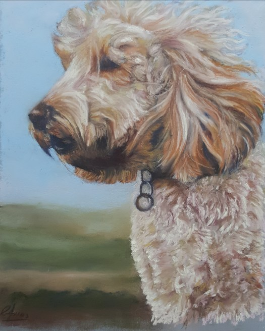 Cockapoo portrait in pastsl