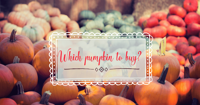 Guidebook for Best Type of Pumpkin to Buy 1