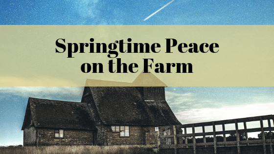 Springtime Peace on the Farm