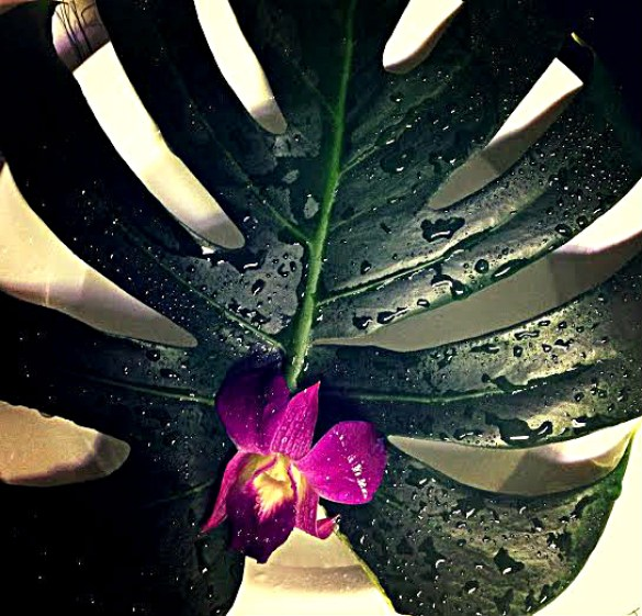 Monstera and orchid