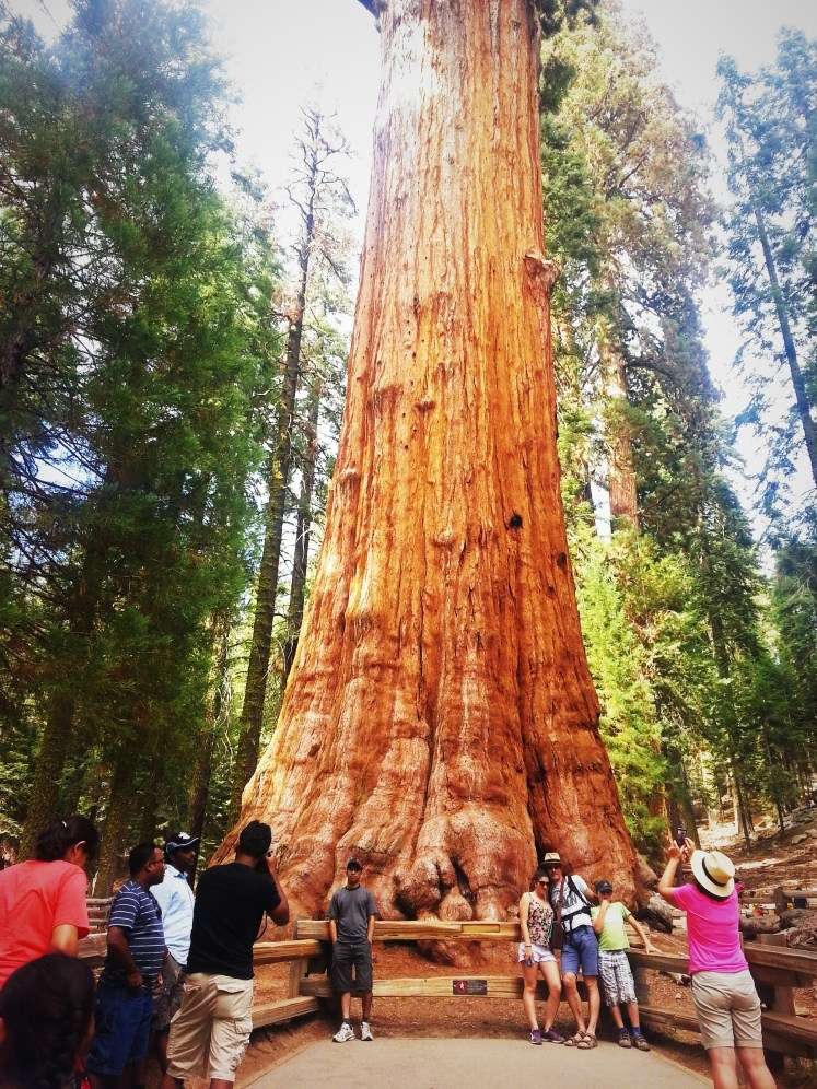 National Sequoia Park 7