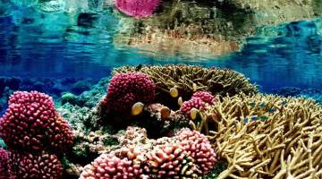 Corals are Dying: Stop Water Pollution Now