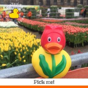 Tulip rubber duck Dam Square Amsterdam Duck Store