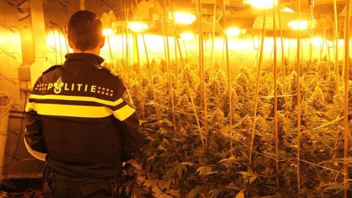Growing weed in the Netherlands