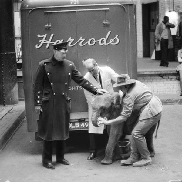 Harrods-Pet-Kingdom-gertie-elephant