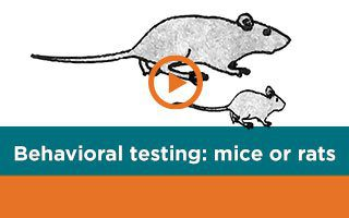 Guide to Behavioral Testing in Mice and Rats