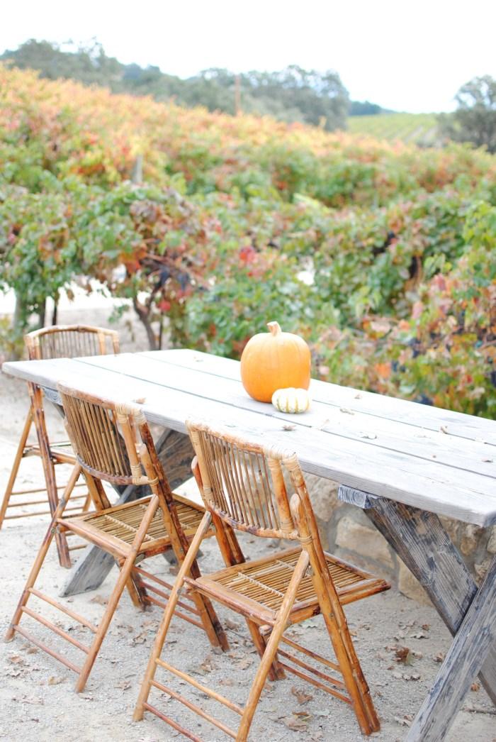 HammerSky Vineyards - amybethcampbell.com