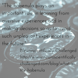 -The habenula plays an important role in
