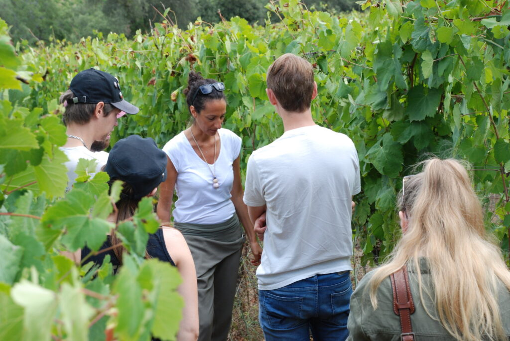 People visiting Monti Cecubi vineyards wine tour in Sperlonga
