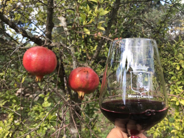 Wine Tour in Sperlonga glass of red wine and pomgranate