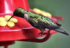 Backyard Bird Feeding 101.