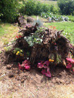 Stump garden.