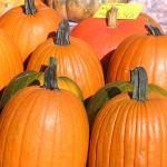 pumpkins, pumpkin crazy,