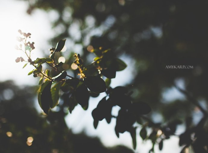 dallas wedding photography with annie and matt at white rock lake (1)
