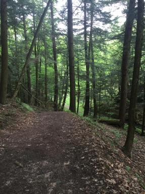 On the Hemlock Trail