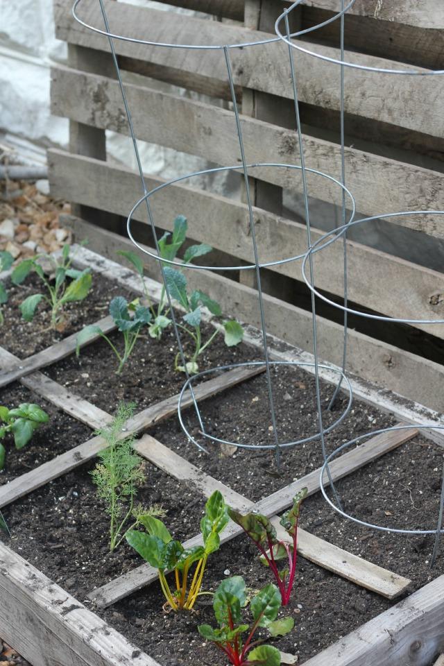 Square-Foot-Garden-pallet