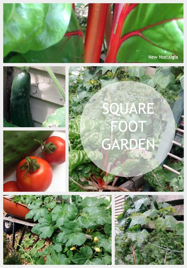 Square-Foot-Garden-Update-2014