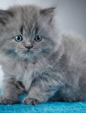 grey cat mural