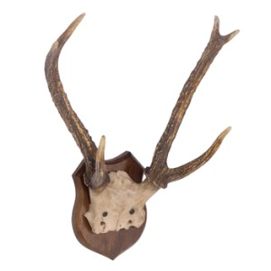 antler-wall-plaque-small
