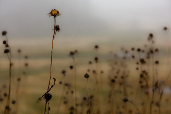 Artistic image of fall weeds.