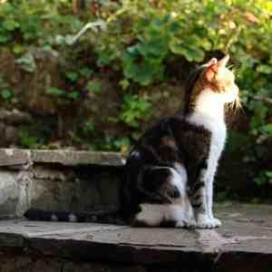 cat sunning itself in the garden