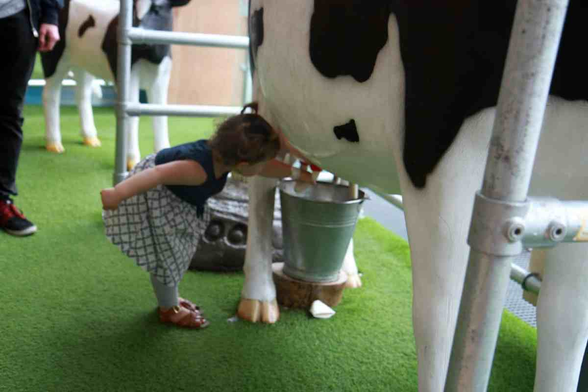 A life sized interactive milking cow At-Bristol Science Centre