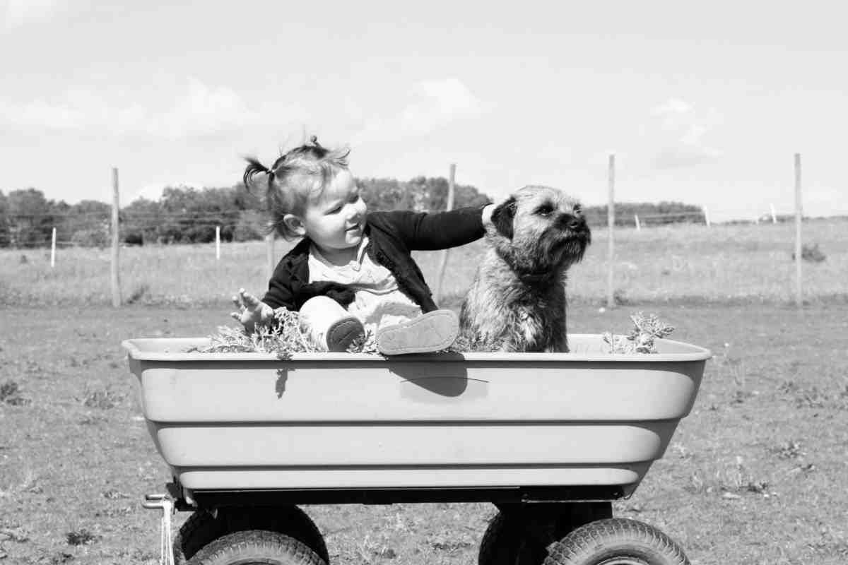 little girl sat in a wheelbarrow with a dog