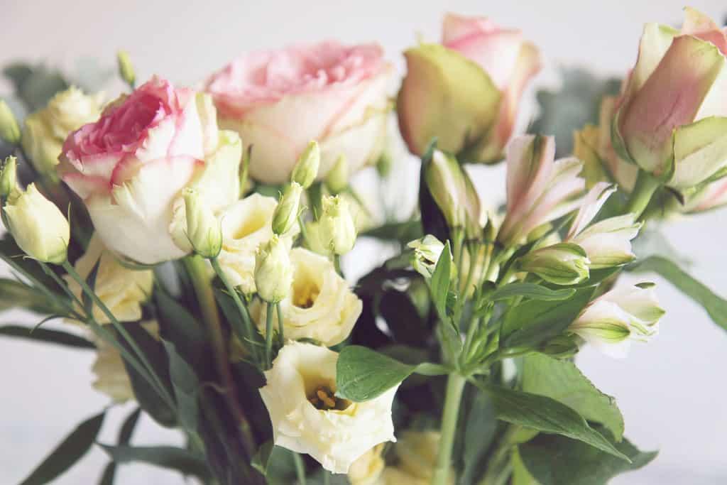 Bloom & Wild giveaway