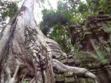 Templo de las raíces