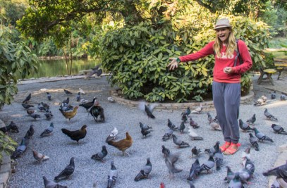 Feeding the birds at the temple.