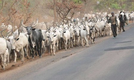 Ganduje Wants Ban Of Herders Coming In From Other African Countries