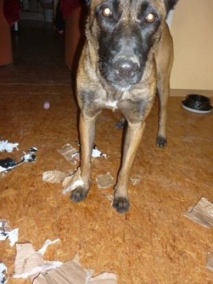 Abba už dotrhala krabicu a pozerá, čo by ešte mohla :D