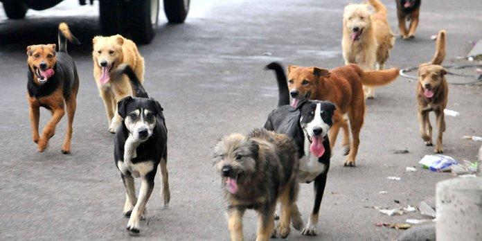 Mascotas, perros de la calle, adopción responsable, esterilización