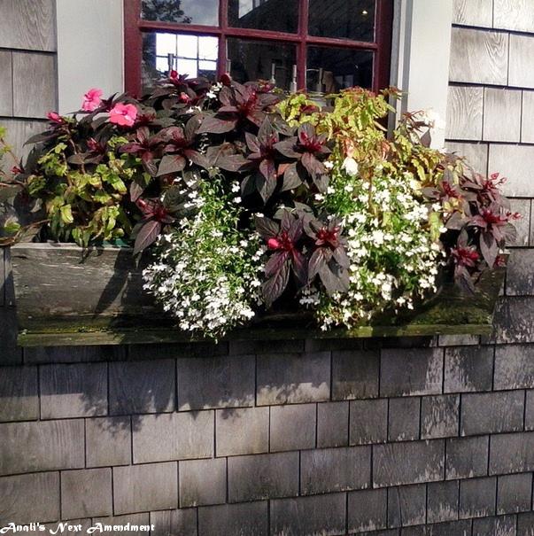 Nantucket flowerbox