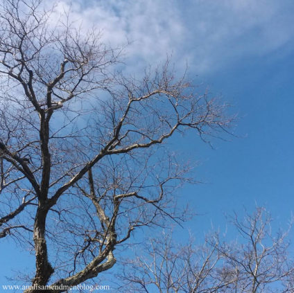 blue sky tree branches