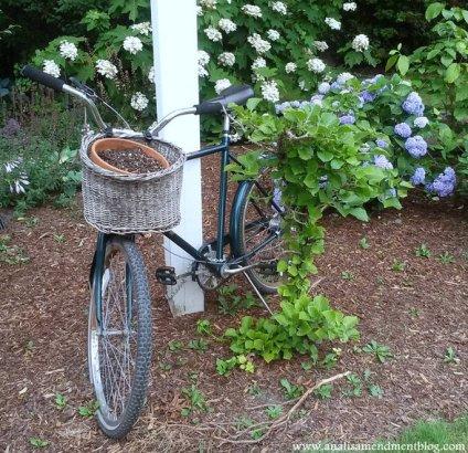 bike_basket_fence