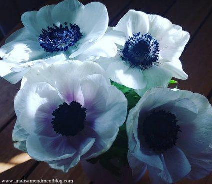 sunlit flowers1